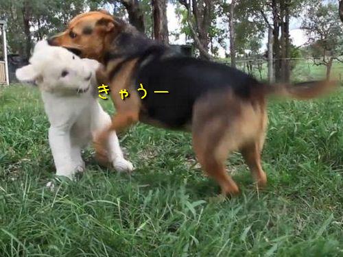 犬とホワイトライオンの赤ちゃん00