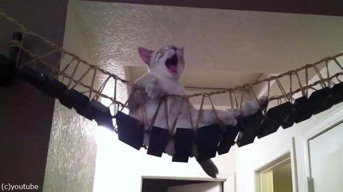 猫と吊り橋11