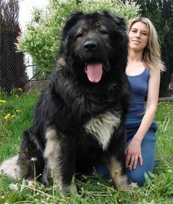 巨大な犬04