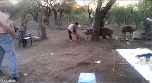 親豚が激怒02