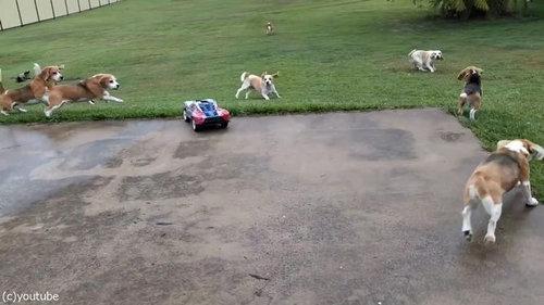犬とラジコンカーと広い庭02