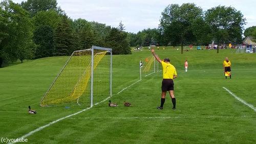 サッカーの試合中にマガモが乱入05