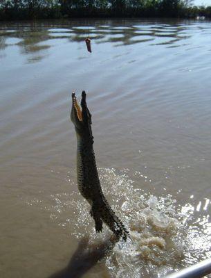 釣られるワニ03