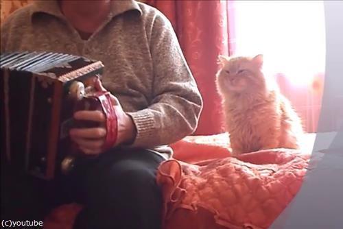 アコーディオンと猫01