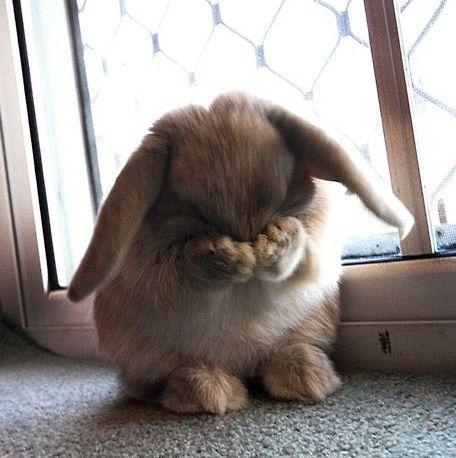 恥ずかしがるウサギ01