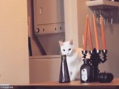 そっと動かして、そっと戻す猫(動画)02
