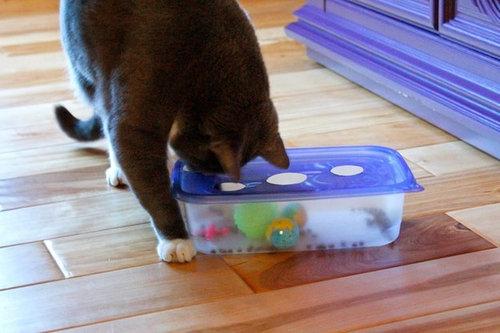 猫の飼い主が知っておきたいこと07
