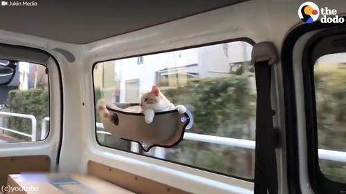 ドライブ猫01