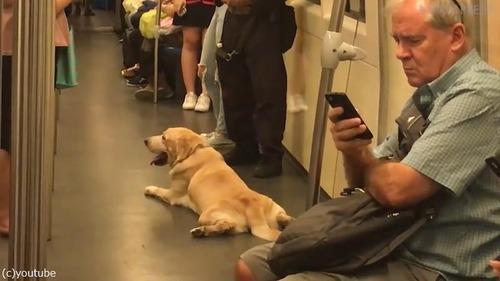 麻薬犬が地下鉄でリラックス03