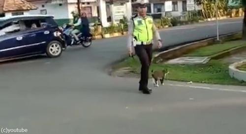 警官が猫を誘導する様子に和む04