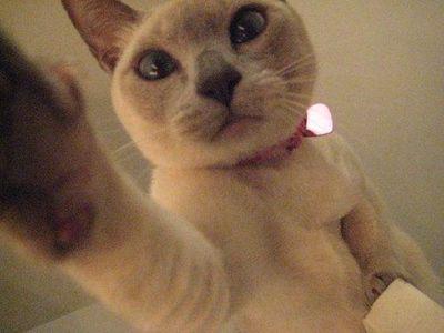 ドアの上の猫03