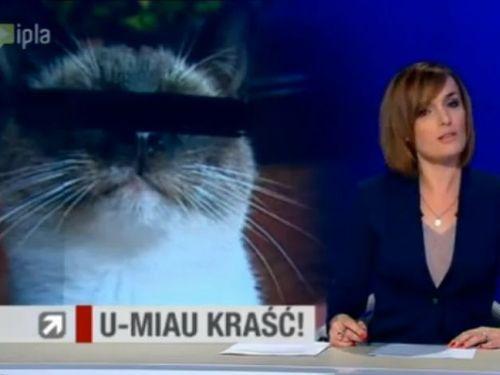 犯人は猫02