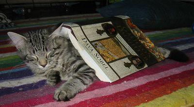 とても賢そうなインテリ猫たち09