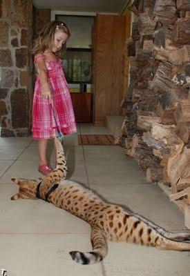 世界一背の高い猫03