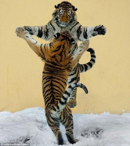 ダンス動物13