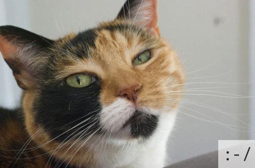 猫の顔文字14