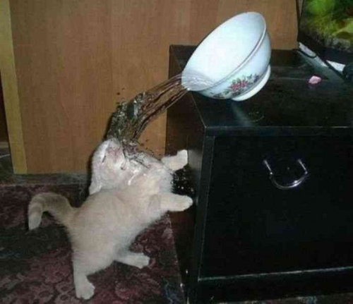 チャレンジャーな猫16