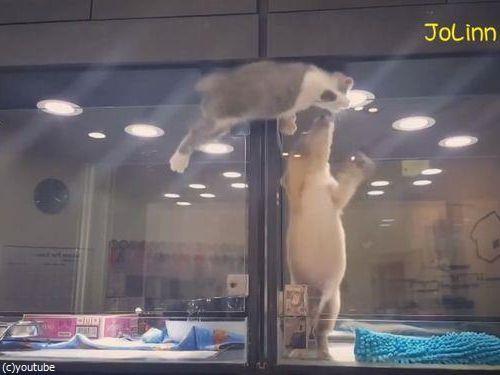 隣の犬に会いに行く猫04