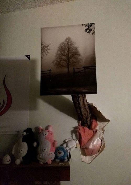 大木が倒れてきた05