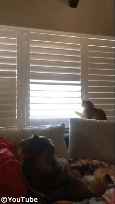 お外を見たい猫 VS ブラインドを閉めたい飼い主さん03
