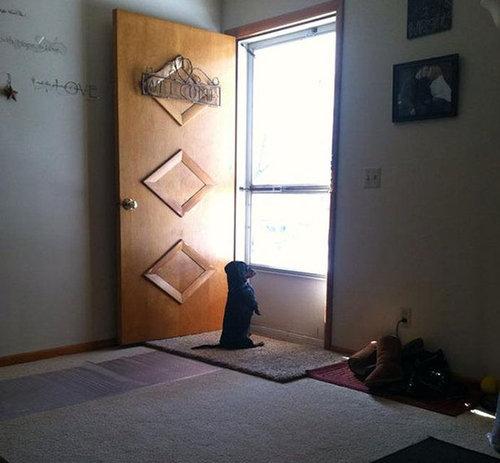 犬を飼うべき理由14