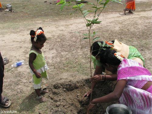 インド、5000万本の木をたった24時間で植える02
