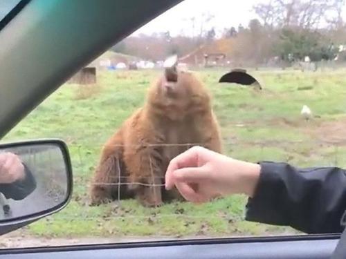 クマに食パンをフリスビーのように投げた03