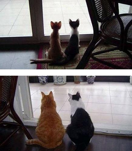 成長した猫13