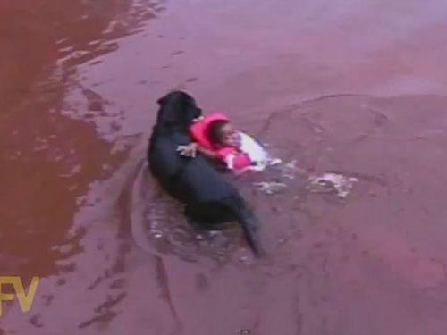 溺れてなくても救助する犬01