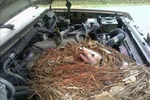 車の中にいる動物02