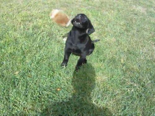 犬がボールをキャッチできるようになるまで01