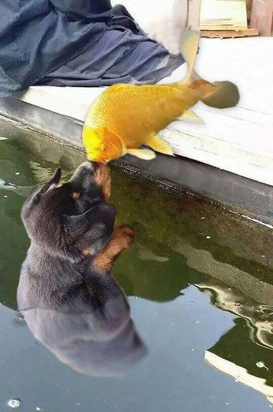 犬と魚の愛情04