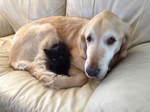 親友の猫を亡くした犬に新しい猫05