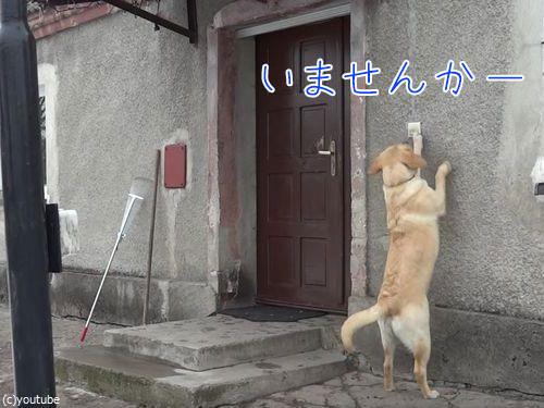 家に入りたい犬00