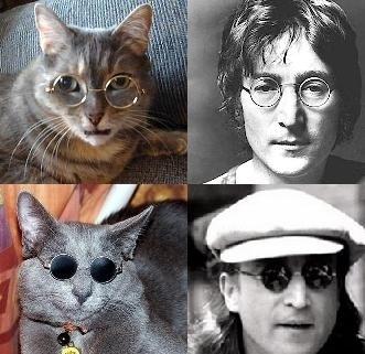 メガネ猫03