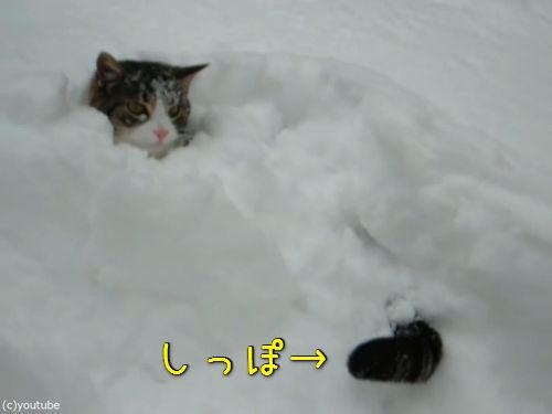 雪遊びが大好きな猫00