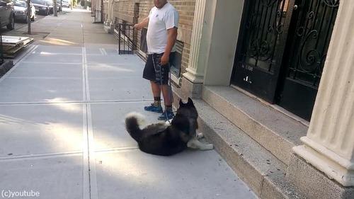散歩大好き犬04