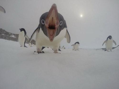 怖いペンギン01