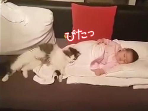 うちの猫は赤ちゃんから離れない00