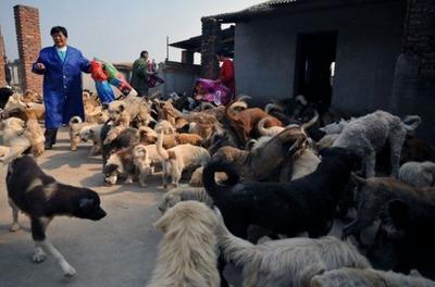 1500匹の犬と200匹の猫05