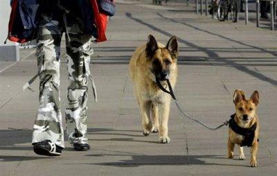 犬の散歩に革命が起こる01