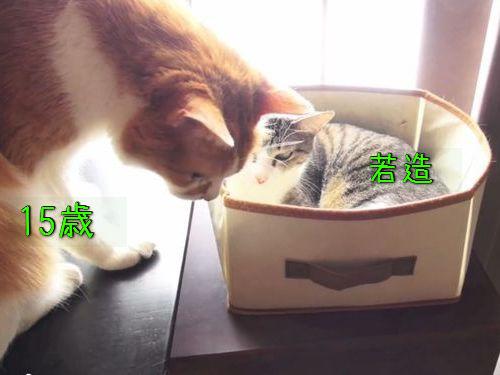 席を譲る猫00