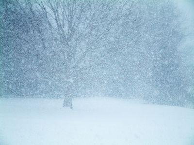 雪の中00