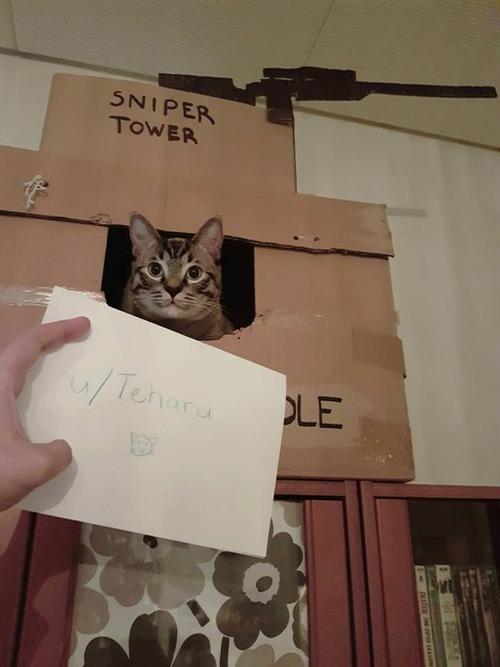 猫の隠れ家02