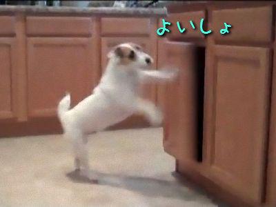 家事をやってくれる犬