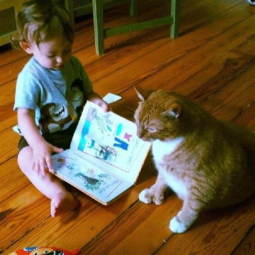 赤ちゃんの育ての親は猫09
