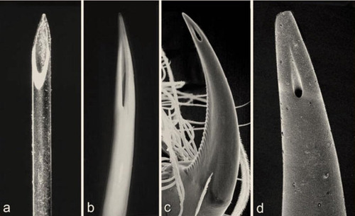 「注射針」「毒蛇の牙」「クモの牙」「サソリの針」01