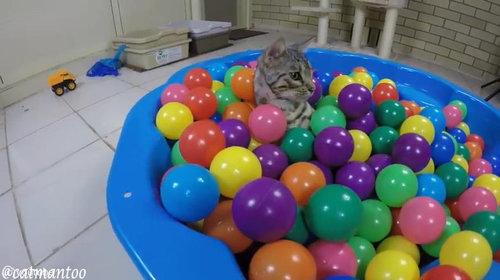 カラーボールと猫03