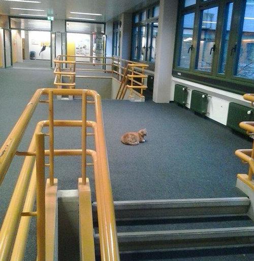 アウグスブルク大学の猫10