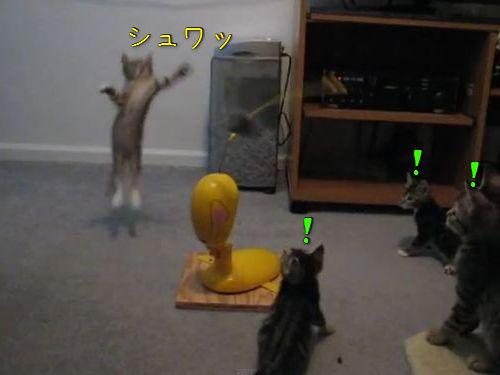 思うままに釣られる子猫たち00